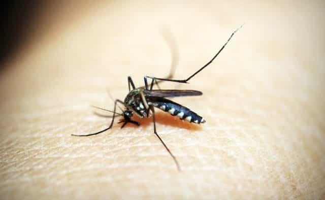 Est-ce que la lumière attire les moustiques ? Réponse à notre question