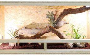 Voici un exemple de vivarium