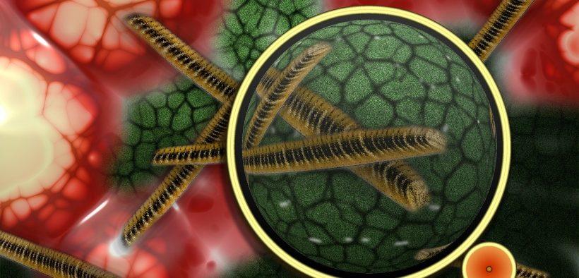 staphylocoque doré bactérie dangereuse