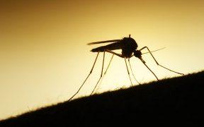 Trouvez le meilleur bracelet anti-moustique parmi notre sélection