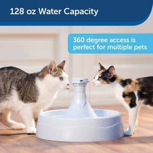 La meilleure fontaine à eau pour chat du marché
