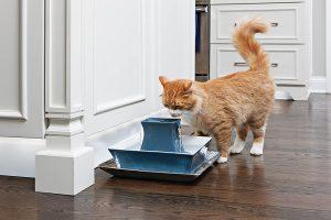 Une fontaine à eau pour chat très performante