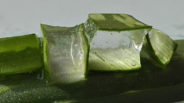 L'aloe vera est une plante particulièrement utile et peut être utilisé de différentes manières